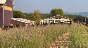 You'll Never Forget A Visit To White Oak Farm, A One-Of-A-Kind Farm Filled With Lavender In Virginia
