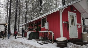 Pick And Cut Your Own Christmas Tree This Season At Snowy Peaks Tree Farm In Northern California
