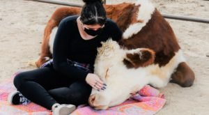 You Can Hug A Cow At Aimee's Farm Animal Sanctuary In Arizona