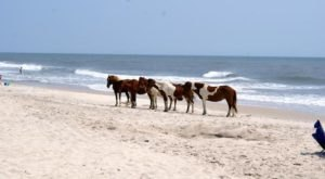 Assateague Island Is A Fascinating Spot in Maryland That's Straight Out Of A Fairy Tale