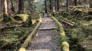 Hike Through The Alaskan Old Growth Forest Right Outside Downtown Juneau