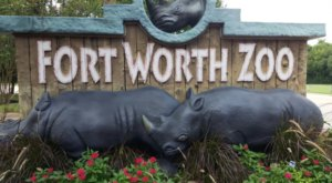 Texas' Fort Worth Zoo Has Been Voted The Best Zoo In The U.S.