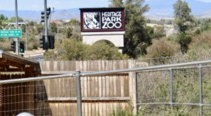 Most People Don't Know About This Underrated Zoo Hiding In Arizona