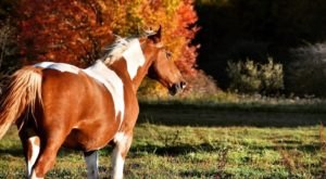 You'll Never Forget A Visit To Mountain Trail Rides, A One-Of-A-Kind Farm Filled With Horses In West Virginia