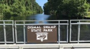 The Great Dismal Swamp Is An Otherworldly Destination On The North Carolina Border