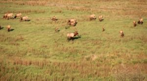 Breaks Interstate Park Is A Magical Place In Virginia Where You Can View A Wild Elk Herd