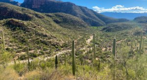 Escape The Daily Grind At Sabino Canyon, One Of Arizona's Most Stunning Natural Wonders