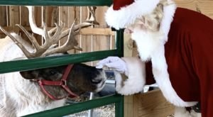 There's An Enchanting Reindeer Farm In Kentucky That Your Family Can Visit This Year