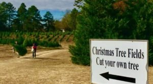 Pick And Cut Down Your Own Perfect Christmas Tree At Motley's Tree Farm In Arkansas
