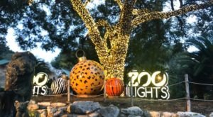 Even The Grinch Would Marvel At Whataburger Zoo Lights At The San Antonio Zoo In Texas