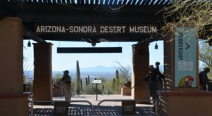 The Arizona-Sonora Desert Museum Has Been Voted The 8th-Best Zoo In The U.S.