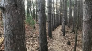Luton Park In Michigan Offers Hiking And Biking Trails That Wind Through A Fantastic Forest