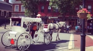 See The Charming Town Of Wickford In Rhode Island Like Never Before On This Delightful Carriage Ride
