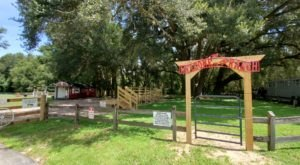 Enjoy An Incredible Trail Ride In Florida At Cactus Jack's In The Horse Capital Of The World