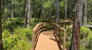An Expansive Preserve With Boardwalk Trails And Natural Paths, Caw Caw Interpretive Center In South Carolina Is A Must-Visit