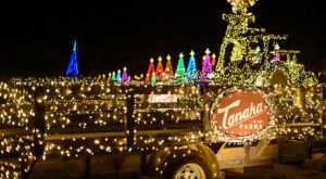 The 30-Acre Farm In Southern California, Tanaka Farms, That's All Aglow With Thousands Of Twinkly Lights