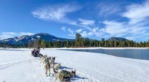 This Winter, Take A Dog Sled Tour Through The Snowy Landscape With Sierra Husky Tours In Northern California