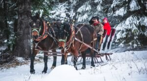 Take A Ride Through The Snowy Forest On A Two-Horse Open Sleigh At Western Pleasure Guest Ranch In Idaho