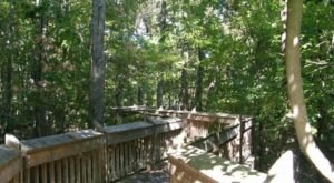Visit This Park In Mississippi That's Home To Well-Hidden Secret, A Tree Top Trail