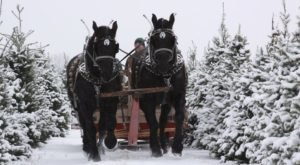 This Cozy Sleigh Ride At Loveberry's Tree Farm Near Detroit Takes You Through A Winter Wonderland