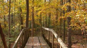 Lose Yourself In An Enchanted Hike Through The Walter B. Jacobs Memorial Park In Louisiana