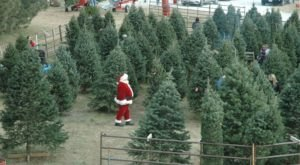 Take A Hayrack Ride Through An Idyllic Christmas Tree Farm At Santa's Woods In Nebraska