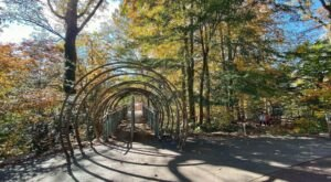 The Longest Elevated Canopy Walk In Pennsylvania Can Be Found At Morris Arboretum