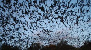Texas' Bracken Bat Cave Is Home To The Largest Bat Colony In The World