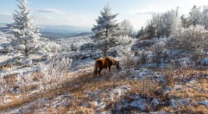 Virginia's Most Popular State Park, Grayson Highlands Is Even More Stunning During The Winter