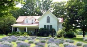 Enjoy A Relaxing Country Getaway When You Stay At The Mulberry Lavender Bed And Breakfast In Tennessee