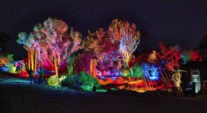 The Spectacular GLOWing Garden In Southern California At South Coast Botanical Garden Will Fill You With Holiday Cheer