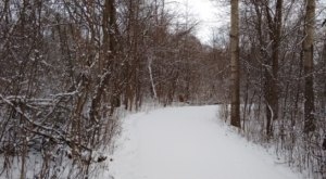 The Easy 1-Mile Winter Hike Near Detroit That's Positively Bewitching