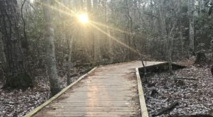 The Osmanthus Trail Is A 3-Mile Loop In Virginia That's Even Lovelier In The Wintertime