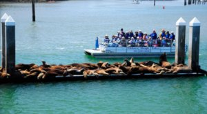 Explore The Wetlands And See Marine Animals On The Elkhorn Slough Safari In Northern California