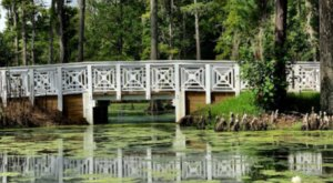 Stroll Along Original Dikes From A Centuries Old Rice Plantation At Cypress Gardens In South Carolina