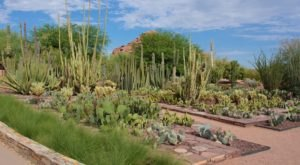 Admission-Free Once A Month, The Desert Botanical Garden In Arizona Is The Perfect Day Trip Destination