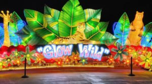 Watch Alabama's Birmingham Zoo Come Alive With Glow Wild: An Animal Lantern Celebration