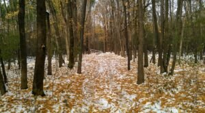 Get Outside This Winter And Hike, Ski, Or Snowmobile At Grant Woods In Illinois