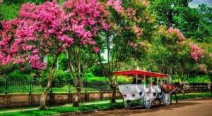 See The Charming Town Of Natchez In Mississippi Like Never Before On This Delightful Carriage Ride