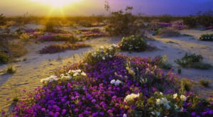 The Sunrises At This Park In Southern California Are Worth Waking Up Early For