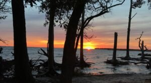 Explore A Maritime Forest, An Abandoned Cemetery, And A Secluded Beach On This North Carolina Hike
