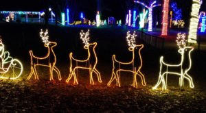 Take A Drive On The Wild Side This Holiday Season During Alabama's Safari Of Lights