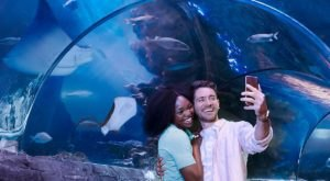 Once COVID Is Over, Make A Beeline For The Coolest Place To Have An Adventure In Arizona, SEA LIFE Aquarium