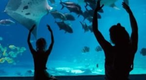 Take A Yoga Class In Front Of Stingrays, Whales, & Fish At The Georgia Aquarium