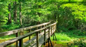 The Whole Family Will Love The Maze Of Trails At The Northlake Nature Center