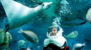 Dive Deep Underwater And Get Up Close And Personal With Fish, Sharks, Rays, And More At Mississippi Aquarium