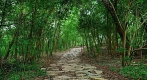 This Charming Path Through Couturie Forest In New Orleans Is Straight Out Of A Fairy Tale