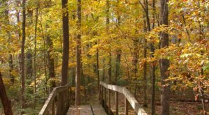 In 2021, Take These 12 Incredible Louisiana Hikes, One For Each Month Of The Year