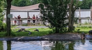 Not Many People Know About This Alligator Sanctuary Right Here In Michigan