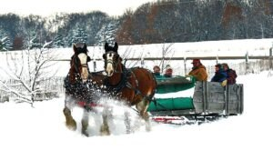 Take a Charming Ride Through Wintry Woods With A Sleigh Ride At Roselawn Stables In Minnesota